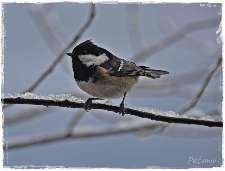 Fuglesang 7