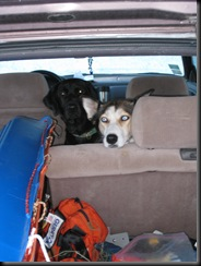 juneaulake_dogs waiting