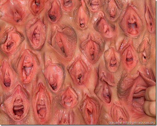 wall of vaginas