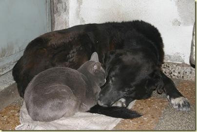 Jack y Gato
