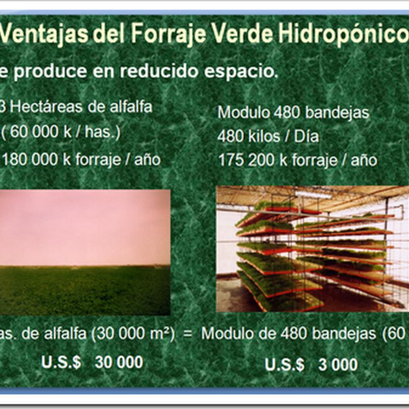 Ventajas del Forraje Verde Hidropónico
