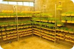 instalaciones-de-forraje-verde-hidroponico-FVH