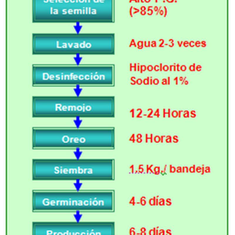 Diagrama de producción del Forraje Verde Hidropónico