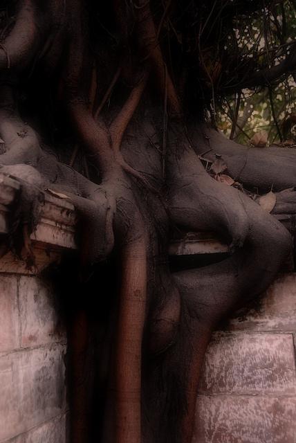 delhi_tree.jpg