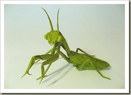 Praying-Mantis