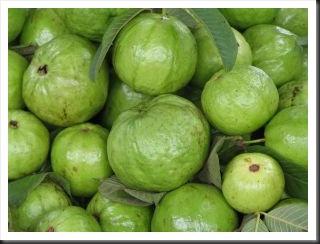 214544_guava