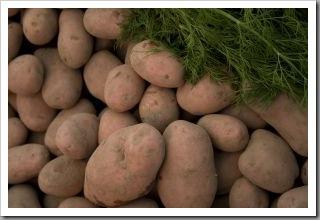 1121257_vegetables_8