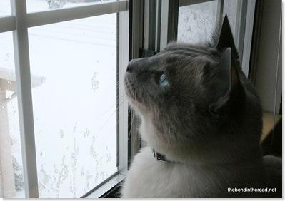 Bijou hunting snowflakes (3)