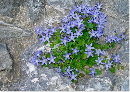 flowers growing on a church wall