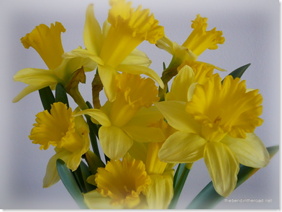 My Sweet Girl's Daffies 2
