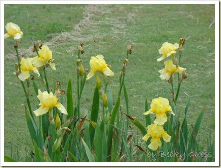 05-18-10 flowers 09