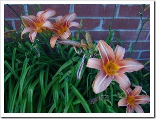 05-30-09 Flowers 01