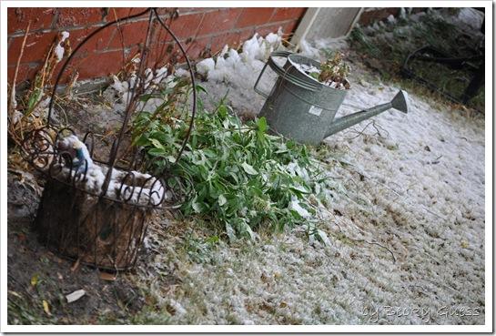 11-12-10 first snow 18