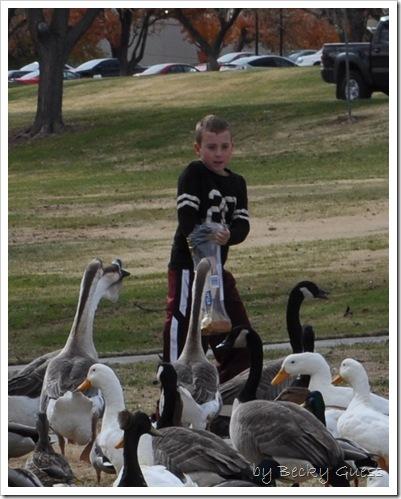11-24-10 Feeding geese 08