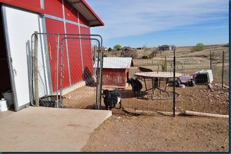 03-31-11 farm visit 67