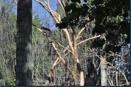 04-28-11 Zoo 029