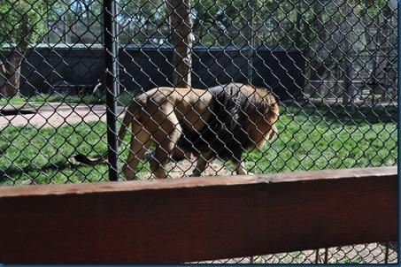 04-28-11 Zoo 037
