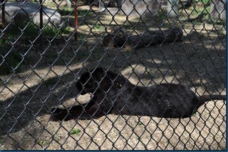 04-28-11 Zoo 043