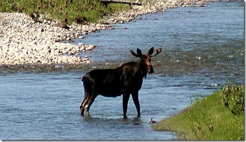 Grand Teton Aug 09 Jim 039