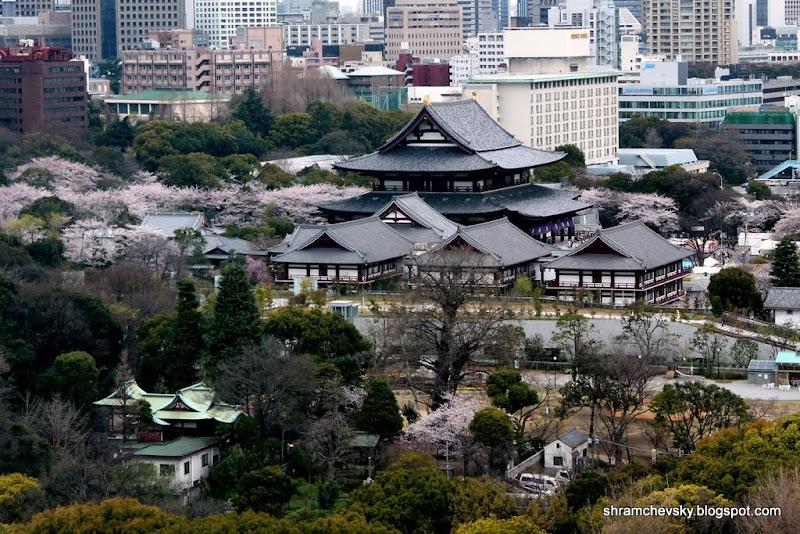 Япония Минато Токио Сакура Цветет Цветы Весна Шибакоен Минато Japan Tokyo Minato Sakura Spring Shibakoen Cherry Blossom