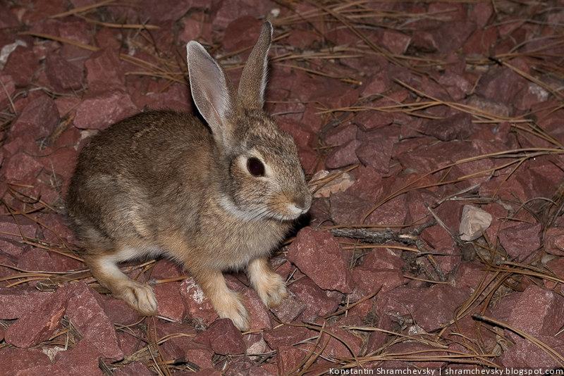 Заяц Кролик Фото