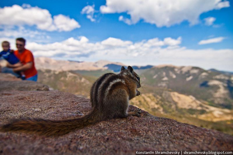 USA Colorado Rocky Mountains National Park Chipmunk США Колорадо Роки Маунтинз Национальный Парк Скалистые Горы Бурундук