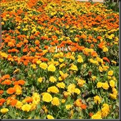flores agua ©