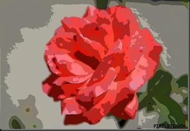 rosa 600_cartoon