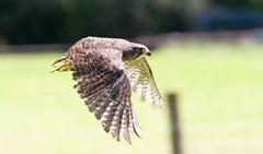 NZ_Falcon1