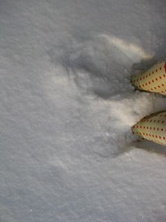Snow 39