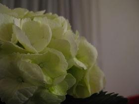Flowers! 4