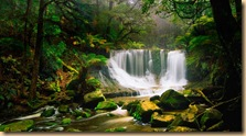 AustralianRainforest