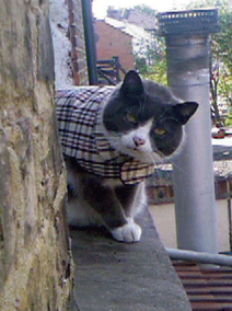 Burberry Cat