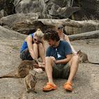 Fütterung der Rock Wallabies