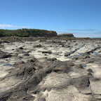 Versteinerter Wald bei der Curio Bay