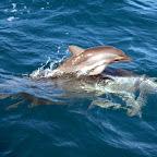 sehr kleines Delfinbaby mit Mutter