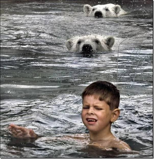 Crianças nadando com os ursos polares