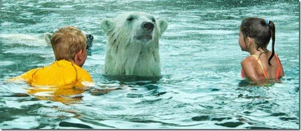 Crianças nadando com os ursos polares (4)