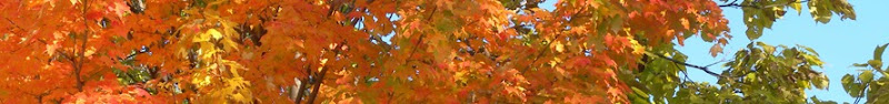 Fall top