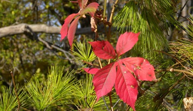 Fall colors and plants Oct 2010 (7)_989Fall colors and plants Oct 2010 (7)compressed