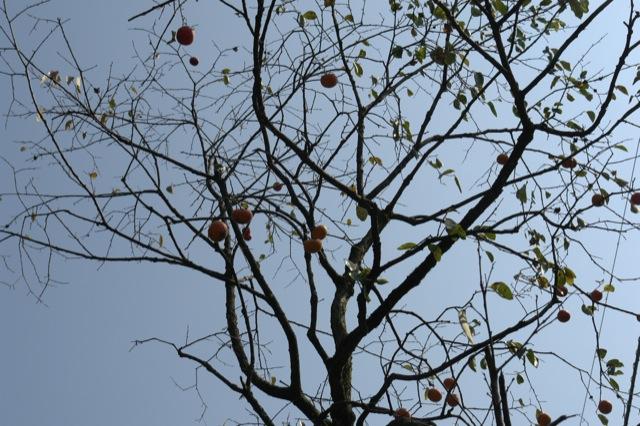 秋の野にて