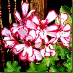 flores 067