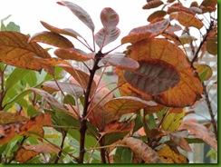 hojas de otoño 2004 001