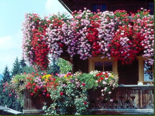 Balcón florido en Alpbach, Tirol, Austria