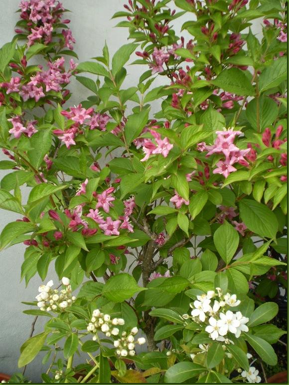 flores de abril 2010027