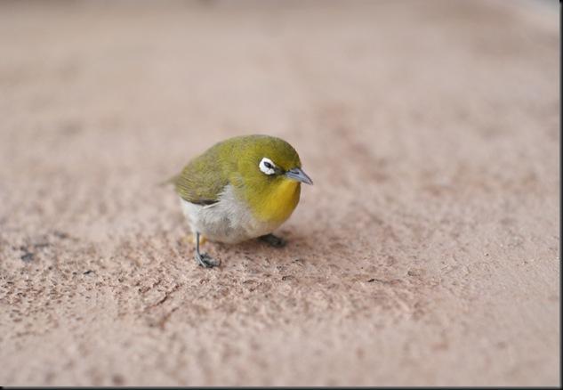 bird (10)