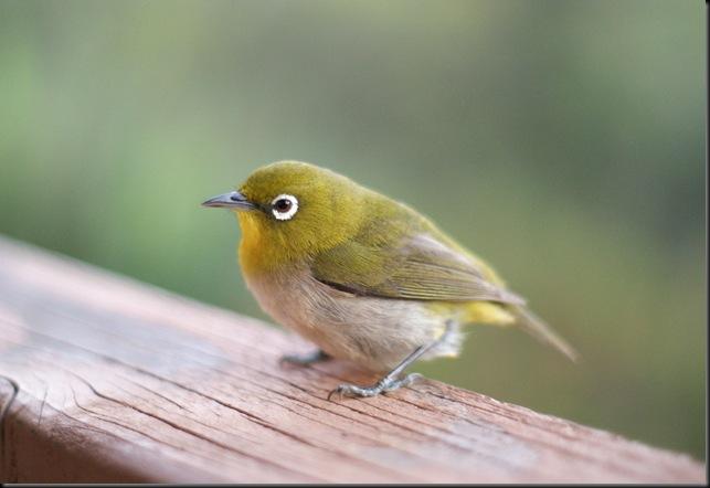 bird (38)