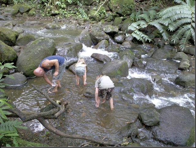 Manoa Falls (36)