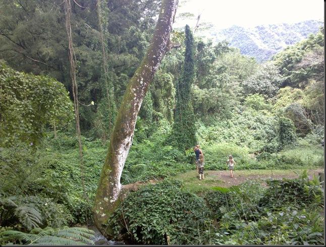 Manoa Falls (62)