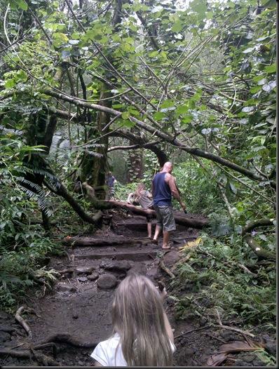 Manoa Falls (6)